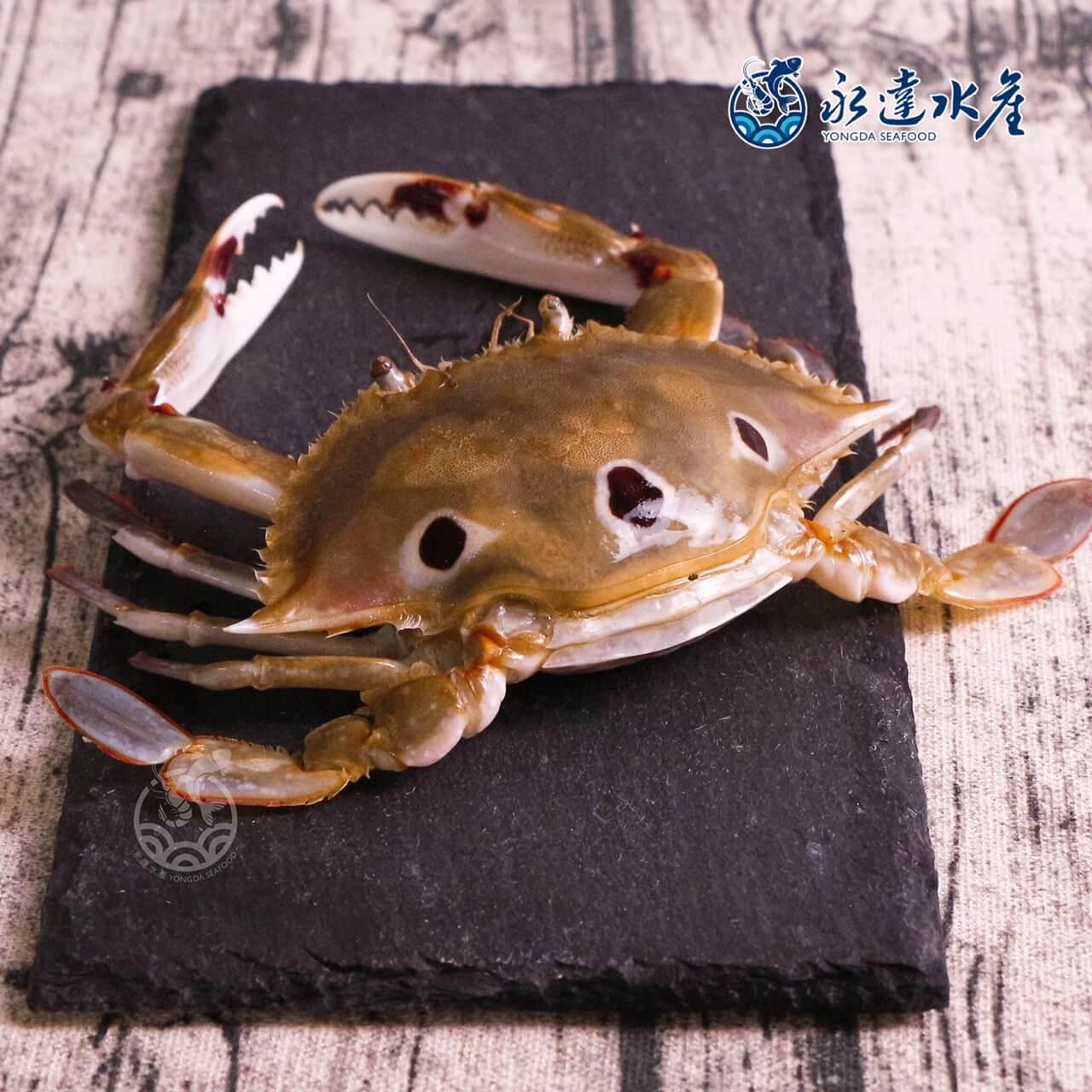 水產|海鮮|鮮凍抱蛋三點蟹|三點蟹|母蟹|蟹肉|蟹黃|螃蟹|蟹