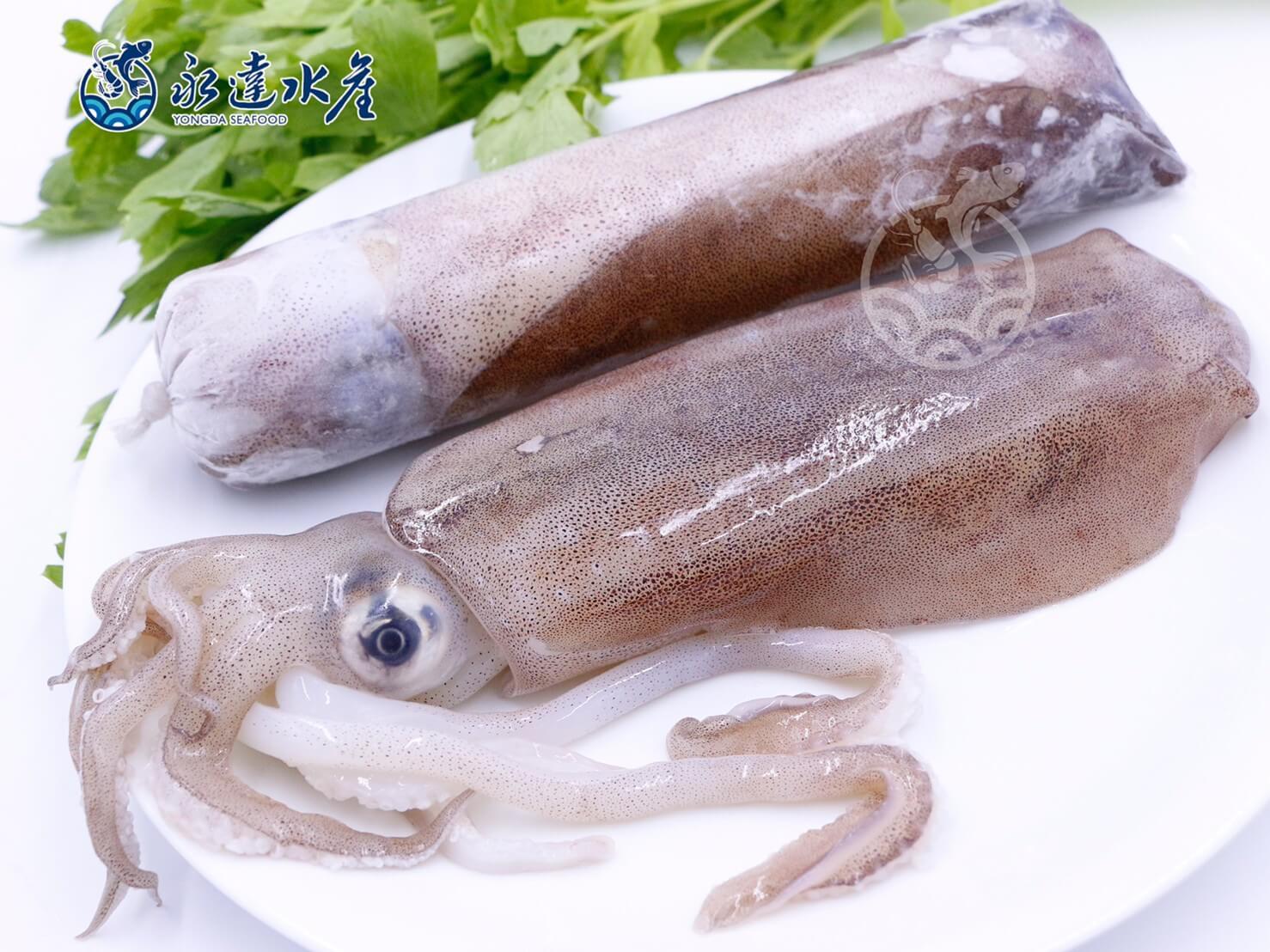 水產|海鮮|活凍軟絲|軟絲|軟翅仔|擬烏賊