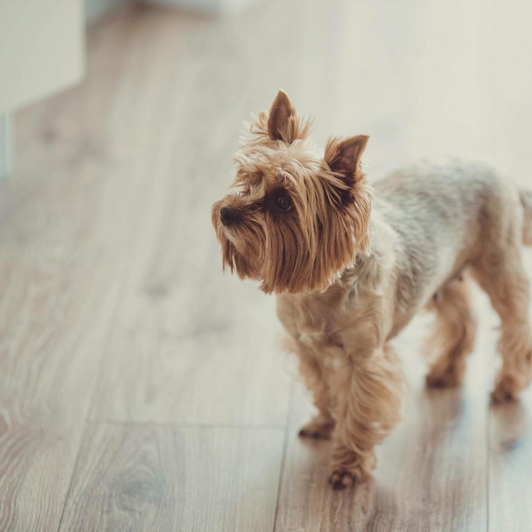 犬 分離 不安 症